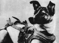 Kudryvaka, beter bekend als Laika.