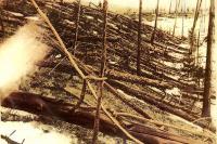 Foto van ontwortelde bomen gemaakt tijdens de 1928 expeditie