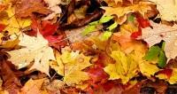 De astronomische herfst is begonnen