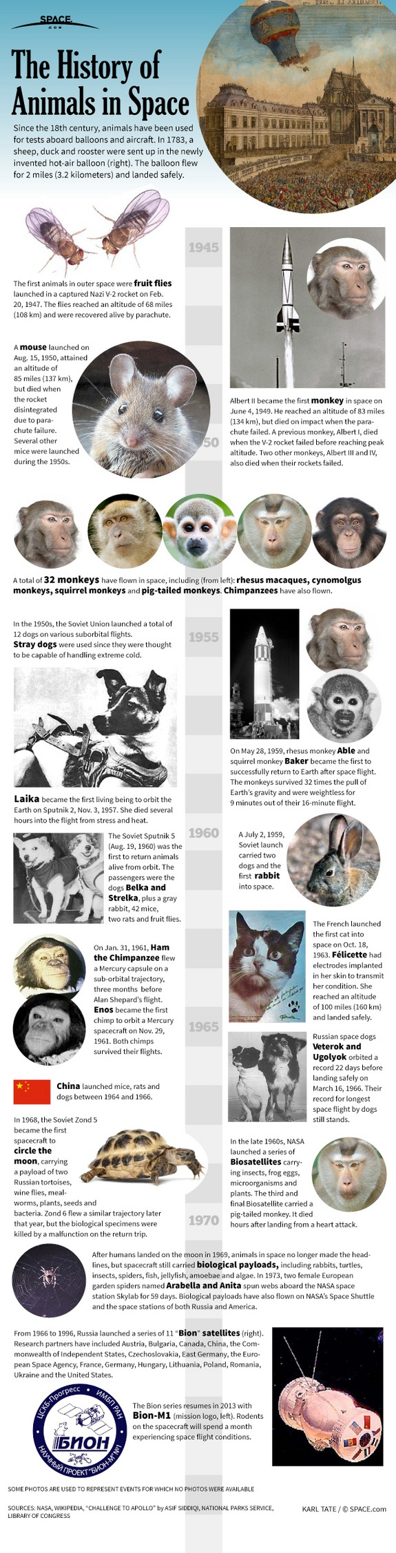 infographic animals in space