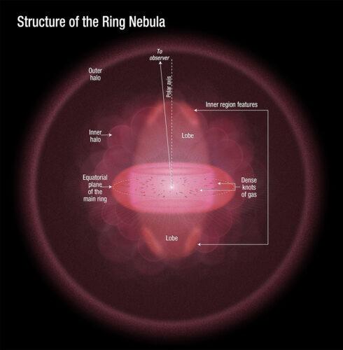 Ringnevel structuur