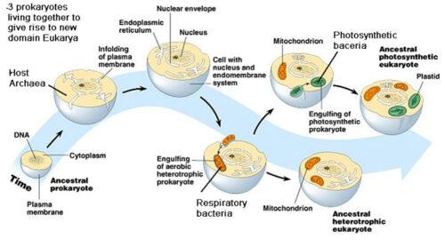 origin of life 6