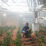 Ook bruine bonen blijken op Mars te kunnen groeien
